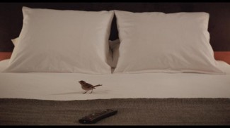 bird-people4