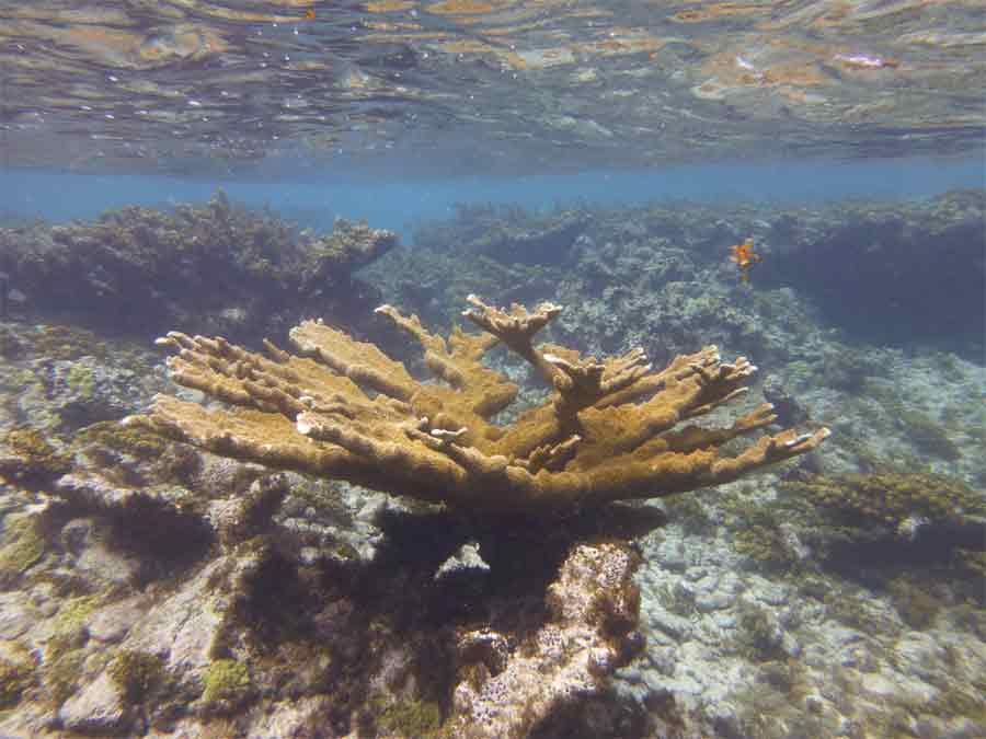 Pr servons le patrimoine naturel de la baie de fort de - Bassin naturel baignade fort de france ...
