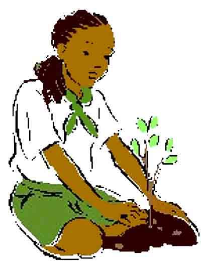pousse_creole