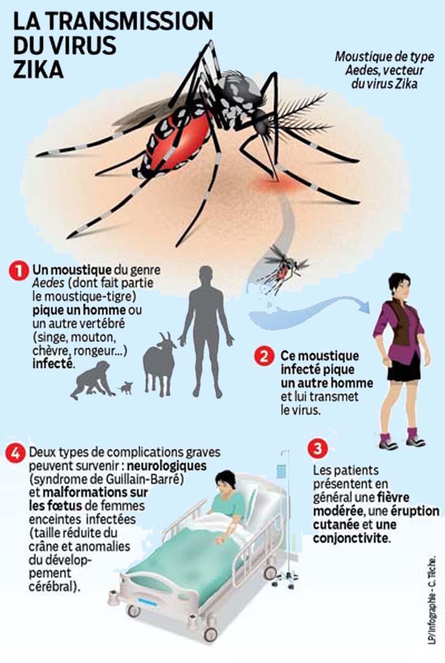 transmission_zika