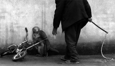 animaux_de_cirque